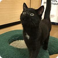 Adopt A Pet :: Glen Ellen 4 - Barrington Hills, IL