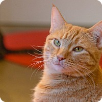 Adopt A Pet :: Marzipan - New York, NY