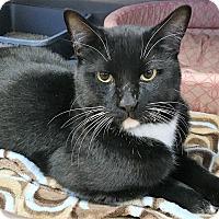 Adopt A Pet :: BW - Toledo, OH