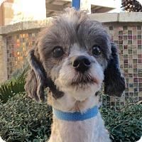 Adopt A Pet :: Panda - Austin, TX