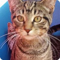 Adopt A Pet :: Tobias - Ocala, FL