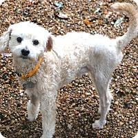 Adopt A Pet :: Trooper - Woonsocket, RI