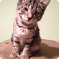 Adopt A Pet :: Bonnie - East Hanover, NJ