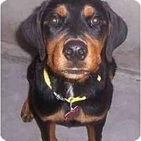 Adopt A Pet :: Lelani - Scottsdale, AZ