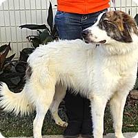 Adopt A Pet :: Dexter & Calvin - NEW VIDEO - Westport, CT