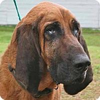 Adopt A Pet :: DUKE! - St, Augustine, FL