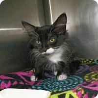 Adopt A Pet :: Calvin - Dover, OH