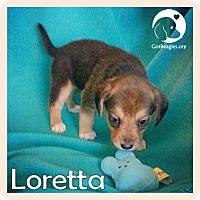 Adopt A Pet :: Loretta - Novi, MI