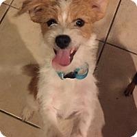 Adopt A Pet :: Buttons - Las Vegas, NV