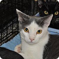 Adopt A Pet :: Paul - La Canada Flintridge, CA