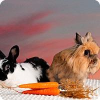 Adopt A Pet :: Truman - Marietta, GA