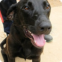 Adopt A Pet :: *Troy - PENDING - Westport, CT
