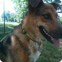 Adopt A Pet :: Sam - Nashville, TN