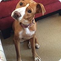 Adopt A Pet :: Matilda - Rockaway, NJ