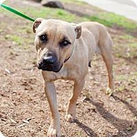 Adopt A Pet :: Serraino - San Diego, CA