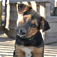 Adopt A Pet :: Korben - Howell, MI