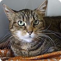 Adopt A Pet :: Gracie - Kensington, CT