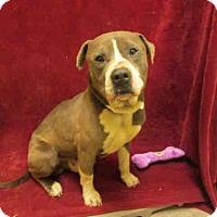 Adopt A Pet :: KING - Upper Marlboro, MD