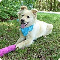 Adopt A Pet :: Sandi - Mocksville, NC