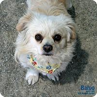 Adopt A Pet :: Banjo - Santa Maria, CA