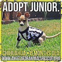 Adopt A Pet :: Jr - Rancho Cucamonga, CA