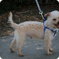 Adopt A Pet :: Simmon - Fountain Valley, CA