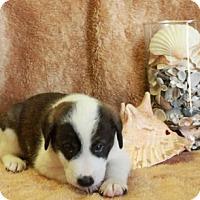 Adopt A Pet :: Miami Beach - Spring Valley, NY