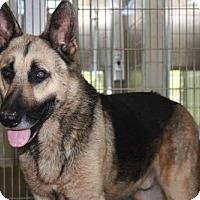 German Shepherd Dog Dog for adoption in Kohler, Wisconsin - CARLISLE