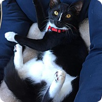 Adopt A Pet :: Brianna - Greensboro, GA