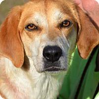 Adopt A Pet :: Kissy - Ridgeland, SC