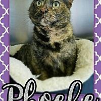 Adopt A Pet :: Phoebe - Edwards AFB, CA
