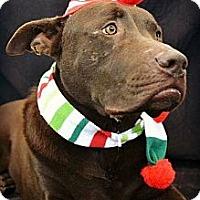 Adopt A Pet :: Chevy - Villa Rica, GA