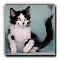 Adopt A Pet :: Rudy - Howell, MI