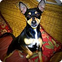 Adopt A Pet :: Mister - Gadsden, AL