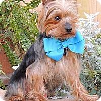 Adopt A Pet :: Otis - Austin, TX