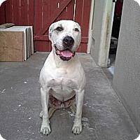 Adopt A Pet :: Pretzel - Santa Monica, CA