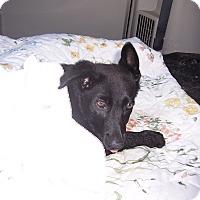 Adopt A Pet :: KATIE - Tully, NY