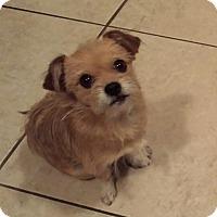 Adopt A Pet :: Chrissy-mas - San Dimas, CA