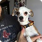 Adopt A Pet :: Buttons
