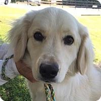Adopt A Pet :: Barley - BIRMINGHAM, AL