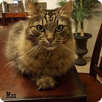 Adopt A Pet :: Max - Buena Park, CA