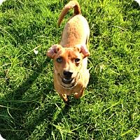 Adopt A Pet :: Preston - Marietta, GA