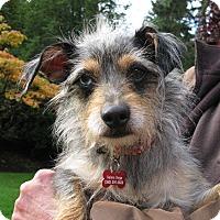 Adopt A Pet :: Gizmo - Salem, OR