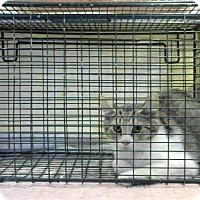 Adopt A Pet :: A673905 - Sacramento, CA