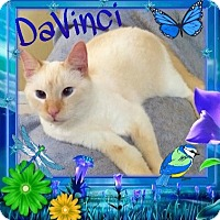 Adopt A Pet :: DaVinci - Harrisburg, NC