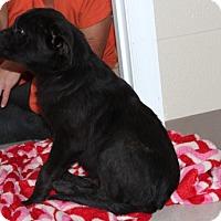 Adopt A Pet :: Danny Boy - Harmony, Glocester, RI