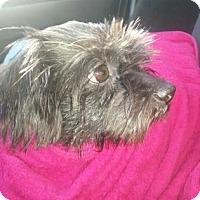 Adopt A Pet :: Walter - Brooklyn, NY