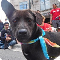 Adopt A Pet :: Velma - Rockville, MD