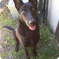 Adopt A Pet :: Poe - New Oxford, PA