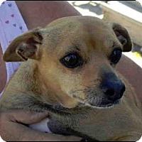 Adopt A Pet :: MR. MAN - Murray, UT